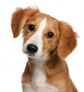 Hund (Foto: petworldkonkurrence.dk)