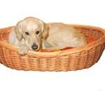 Hunden skal have et sted at sove - f.eks en hundekurv. (foto petworld.dk)