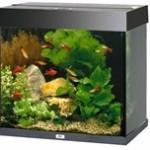 Nyd et flot akvarie i dit hjem (foto petworld.dk)