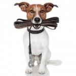 Hundeseler (foto: petworld.dk)